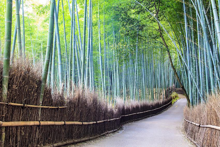 竹林前にある大河内山荘も見どころの1つ