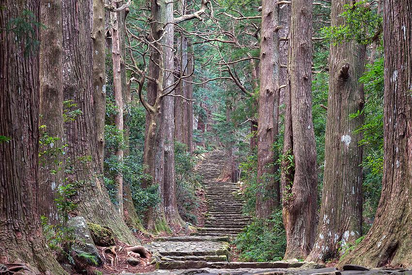 大門坂を登っていく。空気がヒンヤリしてて気持ちいい。