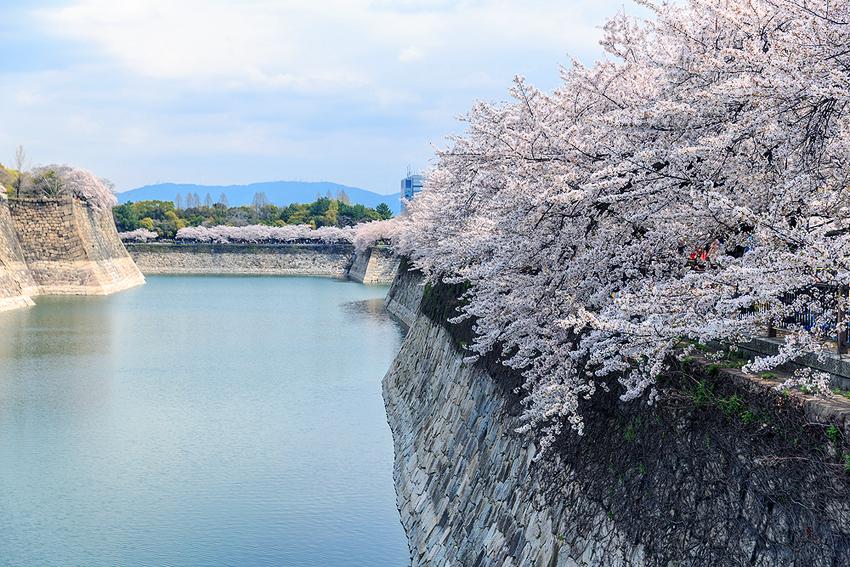大阪城はお花見のスポットとしても有名