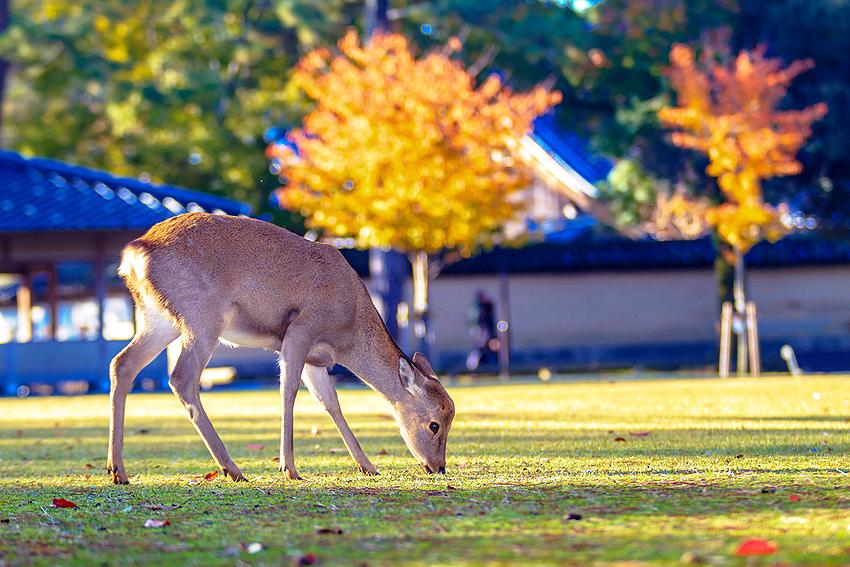 鹿がところどころに。