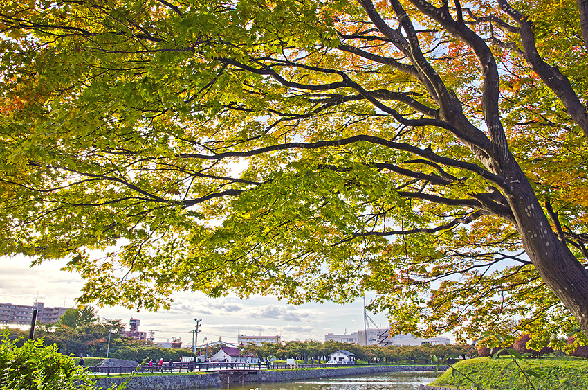函館の秋。もうすぐ紅葉