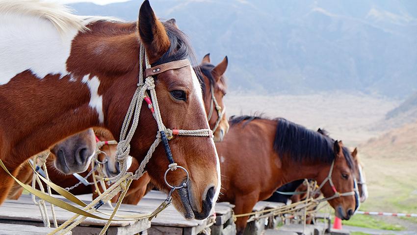 空気が綺麗。乗馬体験もできる。